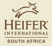 Heifer South Africa